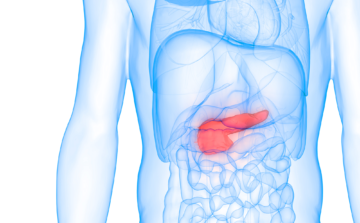 illustration of the pancreas in the human body